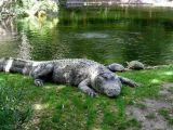 Florida Best Value Attractions Gatorland