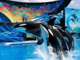Florida Best Value Attractions SeaWorld Orca
