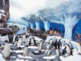 Florida Best Value Attractions SeaWorld Penguins